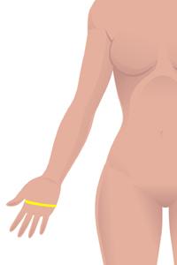 f-hand-circumference.jpg